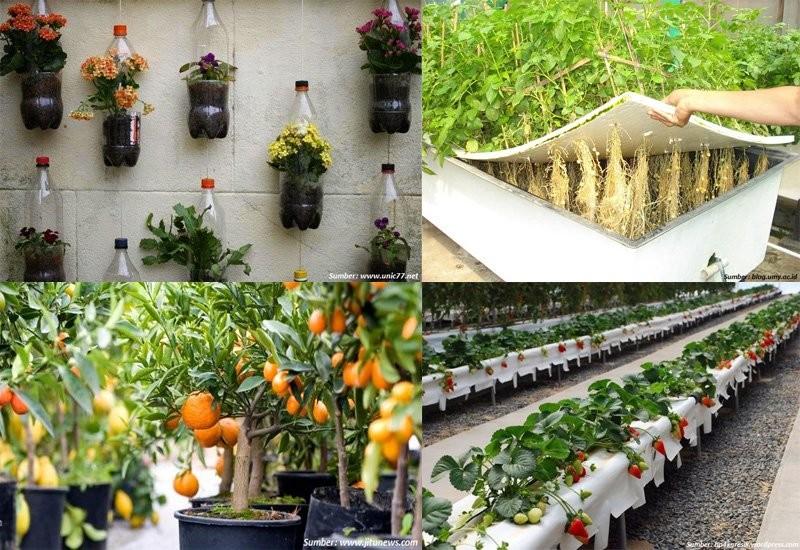 Bertani di Rumah Yuk!